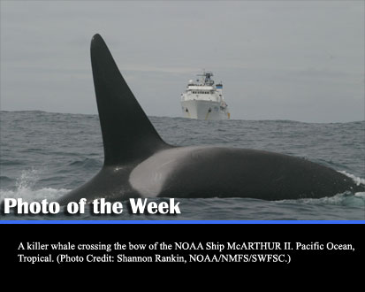 A killer whale crossing the bow of the NOAA Ship McARTHUR II. Pacific Ocean, Tropical. (Photo Credit: Shannon Rankin, NOAA/NMFS/SWFSC.) width=